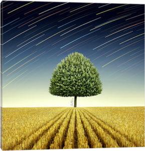 Newton's Apple Tree - Canvas Print
