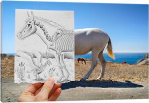Pencil vs. Camera 40 - X Ray - Canvas Print